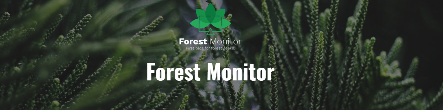 Introducing the Forest Monitor: A great source of knowledge on Polish, European and international forestry